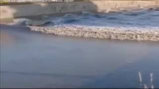 Japan earthquake: small tsunami strikes Fukushima coastline after 7.4 magnitude quake