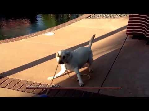 doggo the goodest of boys