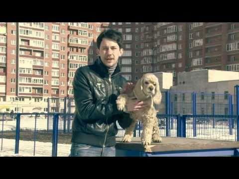 Как сшить попону русского спаниеля - выкройка - YouTube
