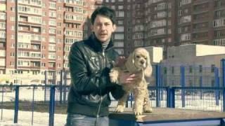 Купить собаку. Говорит ЭКСПЕРТ Купить щенка.