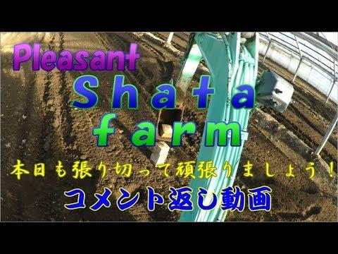 20180721 日本工業規格(JIS=Japanese Industrial Standards)本日も頑張りましょう!!/きゅうり農家/きゅうり栽培/愉快なshata農園