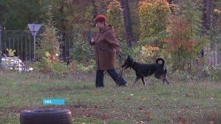 В Уфе не хватает площадок для выгула собак