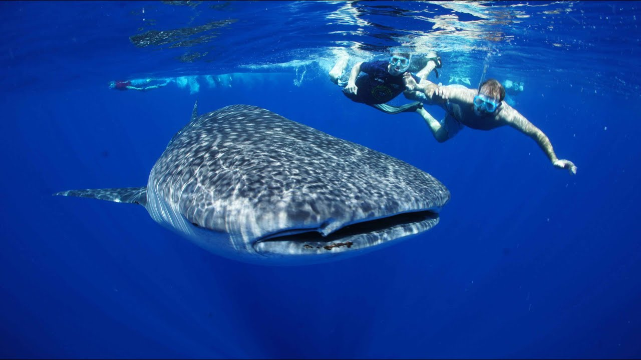 3d Wallpaper Fish Aquarium Riviera Maya Excursion Swim With Whale Shark Youtube