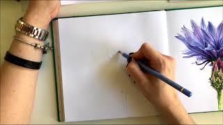 Скетч-Урок: Ботаническая иллюстрация маркерами. Цветок Луговой Василёк.