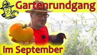 Gartenrundgang September 2019 mit den 3 besten Kartoffelsorten, Hühnern, Bienen und der Katze Luzi
