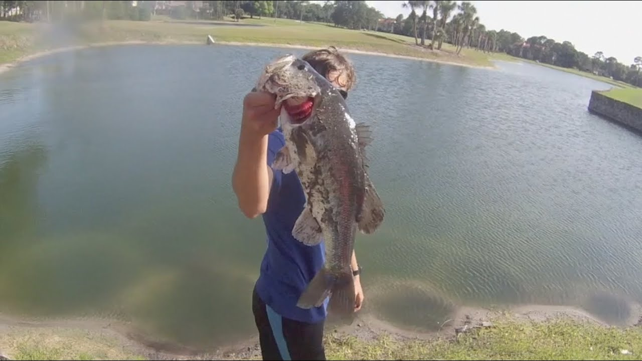 Big bass pond fishing youtube for Big pond fish