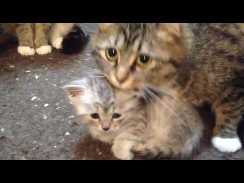 赤ちゃんを守る母猫 Mother cat guarding the baby cat
