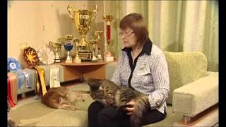 Чтоб я так жил Сибирские коты