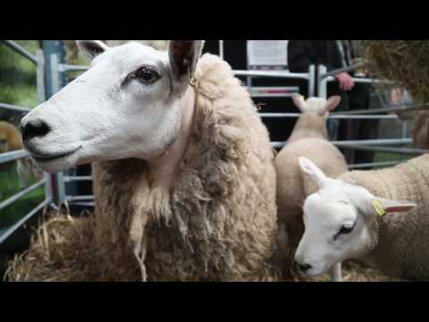UK sheep industry heading for volatility post-Brexit