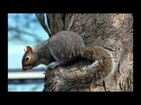 totem animal squirrel