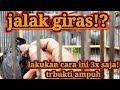 Tips Pencinta Jalak Kebo Wajib Nonton Ini  Mp3 - Mp4 Download