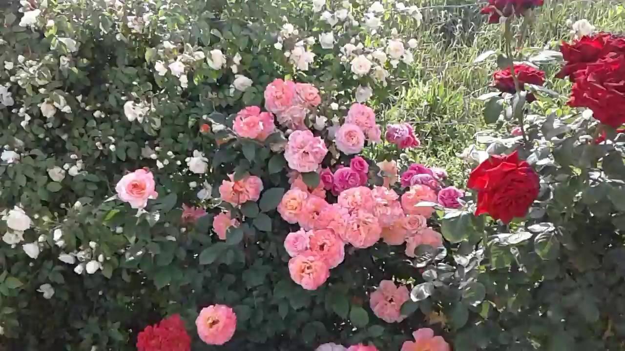Заказ и доставка стабилизированных букетов роз в акриловых боксах и в. На любой второй букет, не привышающий стоимость первого букета. Купить.