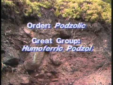 The Podzolic Order - Canadian Soil Classification Series