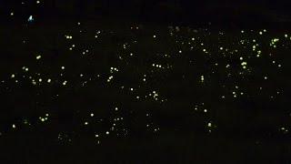 ソニーα6300で4K動画撮影 辰野町ほたる童謡公園ゲンジボタルの乱舞