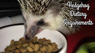 Hedgehog Diet: Kibble Requirements