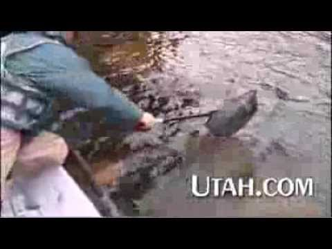 Green river fly fishing youtube for Green river utah fishing report