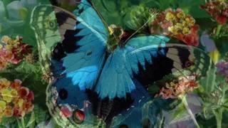 A pillangóknak van-e látásuk, a kultúra szolgálatában