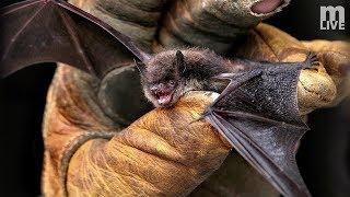 Bats of Michigan thumbnail