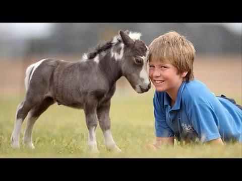 Mini Horses Are Soo Damn Cute Youtube