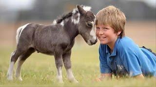 Mini Horses Are Soo Damn Cute!