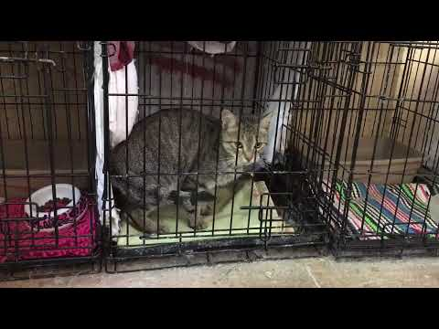 Feral Cat is an Escape Artist!!