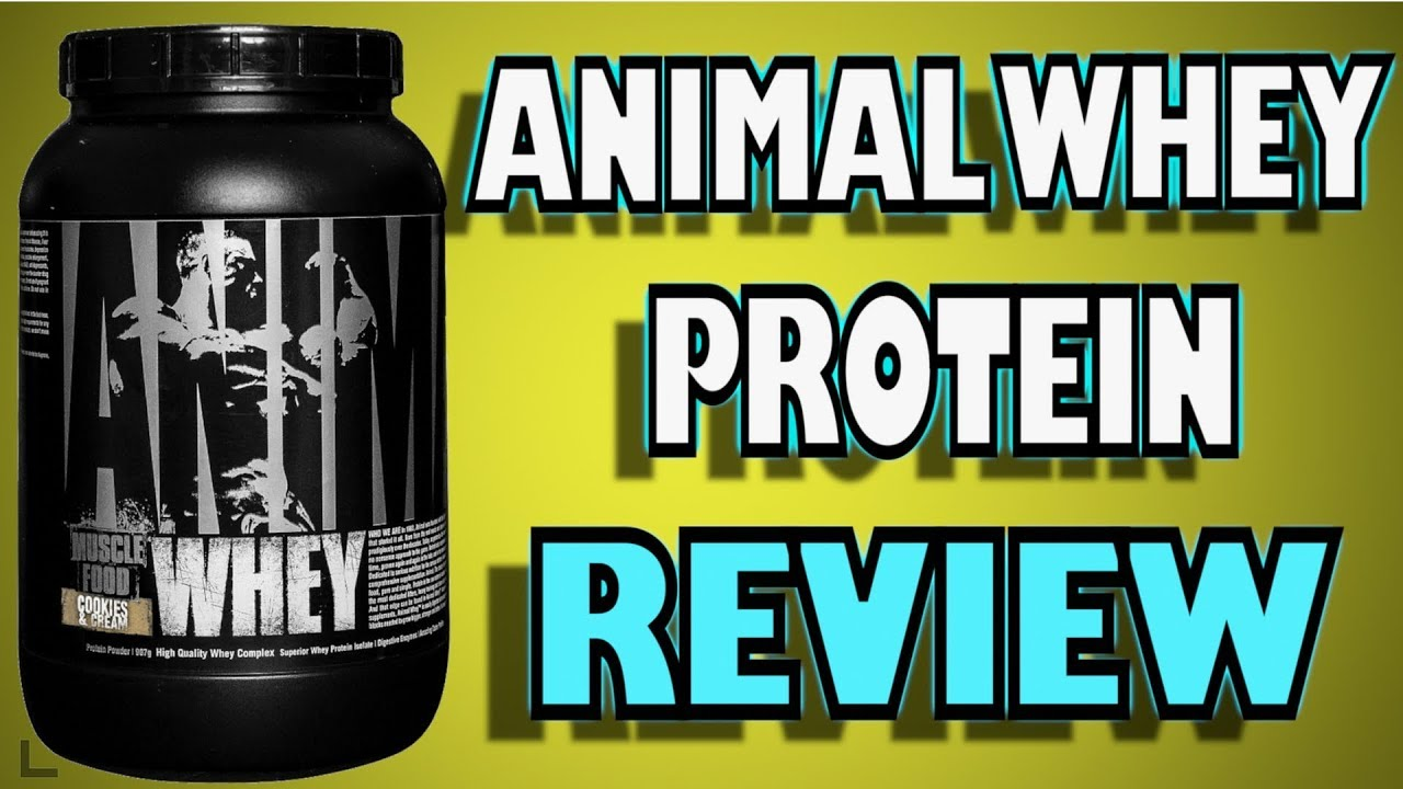 9c6111f46 Animal Whey Protein Review By Universal Nutrition - YouTube