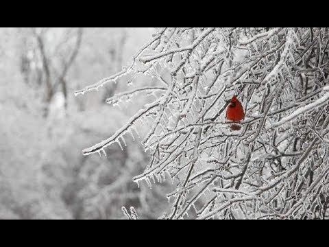 Weather News Today with J7409 Ice Storm Warning up for some  Tues Feb 20 2018