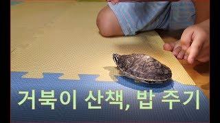 VLOG EP3 : 거북이 산책, 밥주기 (feat. …