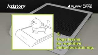 Pet Toilet Training, dog bathroom , scatophagy , dog defecation by Azistory / 아지스토리