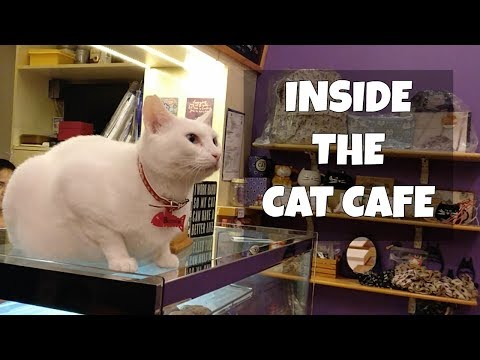 Let's visit Cat Cafe Manila