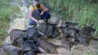 Feral Hog Management - Arkansas Farm Bureau
