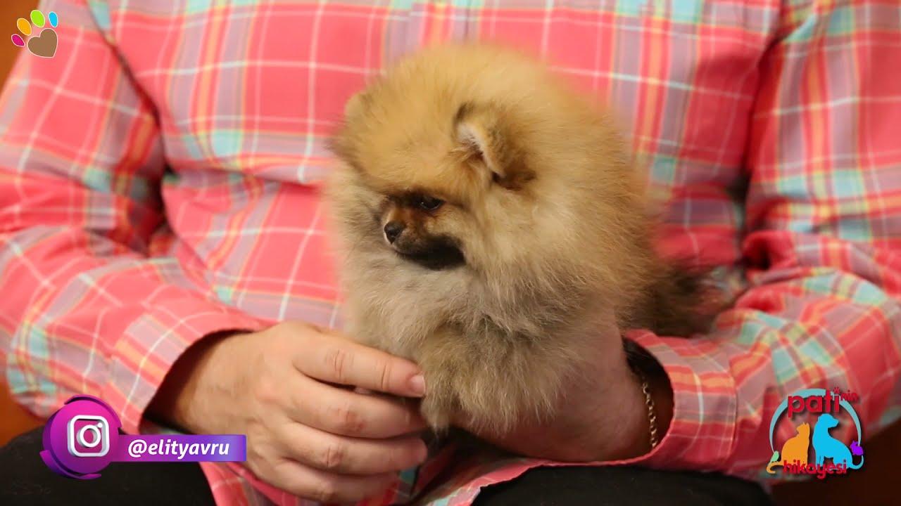 Poodle ırkı köpeğim korkunca çok fazla tepki veriyor, ne yapabilirim ?