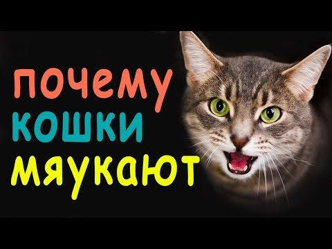 Вопрос: Почему кот орет после того, как сходит по большому (коту 1 год)?