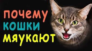 Почему Мяукают Коты? Что Коты Хотят Сказать?