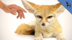 Top 3 Exotic Animals You Can Own As Pets