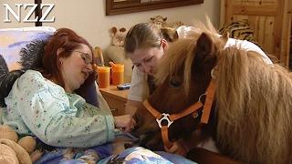 Tiere helfen heilen - Dokumentation von NZZ Format (2007)