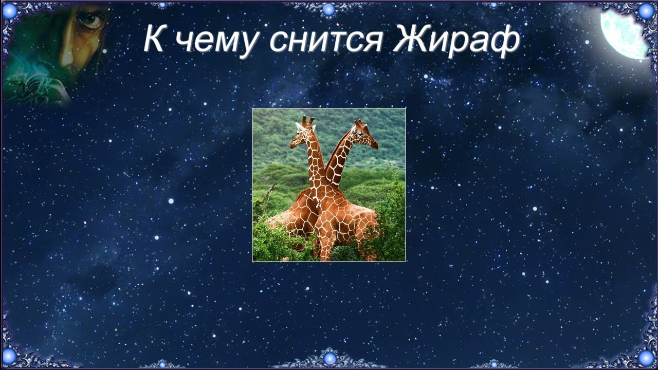 К чему снится Жираф (Сонник)