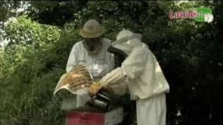 Les bienfaits de la propolis