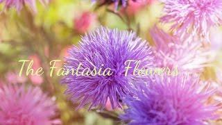 First Instalment ~ Paragraph 1 & 2 Fantasia Flowers