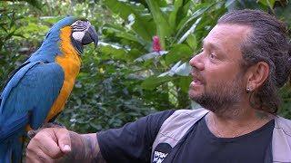 As Aventuras do Richard no Paraná: Parque das Aves (Foz do Iguaçu - PR)