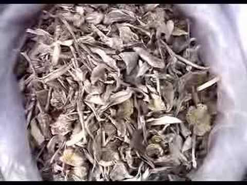 KunMing p (YunNan China)