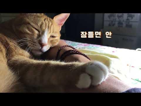 고양이가 행복한 꿈을 꾸었습니다.