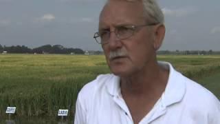 Blast outbreak on rice is worst seen in years