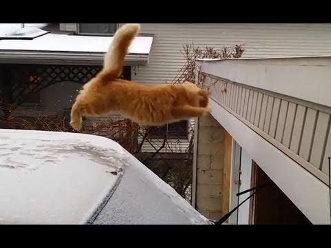 Humorous Cat Leap Fail 2015