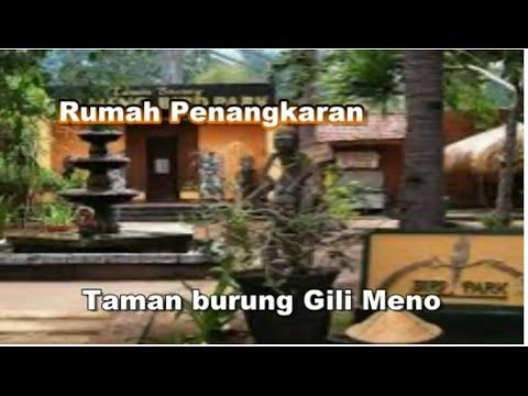 Wisata Indonesia : Taman Burung Gili Meno Lombok Indonesia, Mopon ID