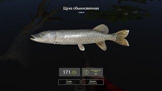 Русская рыбалка 4 - озеро Комариное - Собираю спиннинг и иду за щукой