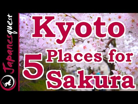 Top 5 Places to See Sakura (Cherry Blossoms) in Kyoto!