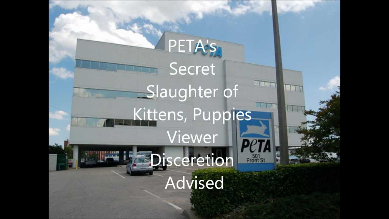PETA Animal ABUSE EXPOSED! Secret Slaughter of Cats and Dogs! - YouTube