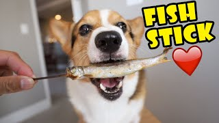Corgi Dog Discovers Japanese Fish on a Stick || Life After College: Ep. 648