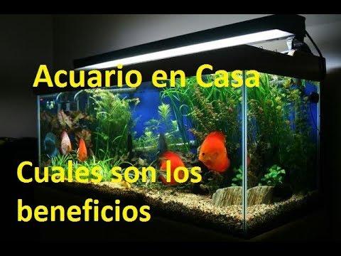 Beneficios de tener un acuario en casa acuario en casa - Acuario en casa ...